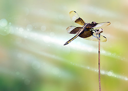 A Dragonfly perched in the field on a weed as morning light shines brightly