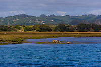 Elkhorn Slough, Moss Landing, Monterey County, California USA