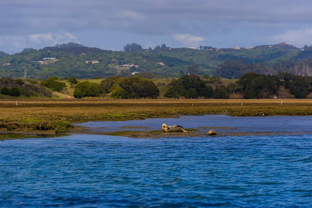Elkhorn Slough, Moss Landing, Monterey County, California USA
