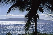 Palm tree, Wailea, Maui, Hawaii<br />