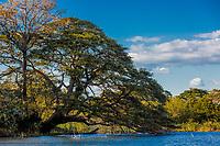 trees of las isletas de Granada Nicaragua lake