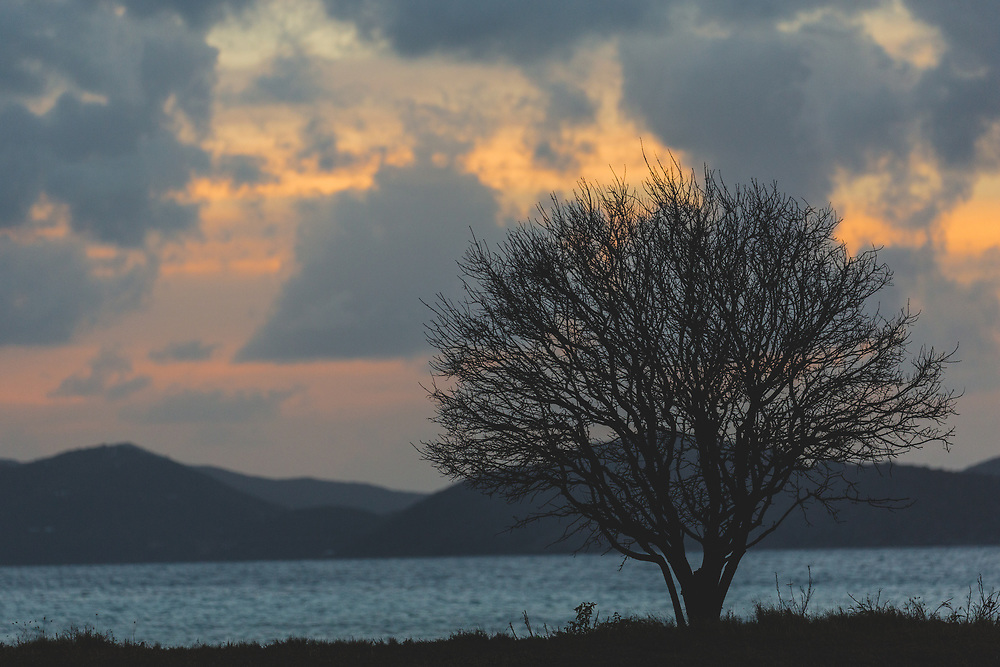 A silhoutted tree on the shoes of Virgin Gorda with a glowing sunset on display.