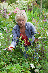 Carol Klein trimming Geranium psilostemon after it has finished flowering