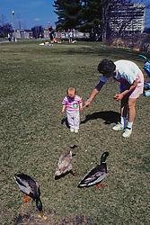 Parent & Child Feeding Mallard Ducks
