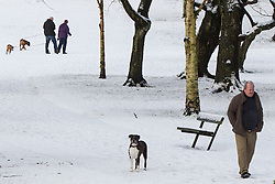 © Licensed to London News Pictures . 26/01/2013 . Salford , UK . People walk their dogs and enjoy fresh overnight snow this morning (26th January 2013) in Buile Hill Park , Salford . Photo credit : Joel Goodman/LNP