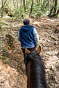 A park guide leads a horse carrying tourists up the steep mountain trail to view the annual mass migration of Monarch butterflies in the forests of the El Capulin Monarch Butterfly Biosphere Reserve in Macheros, Mexico. Each year millions of Monarch butterflies mass migrate from the U.S. and Canada to the Oyamel fir forests in central Mexico.