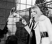 Miss Eva Rueber-Staier, Former Miss World from Austria and the World Wildlife Fund's 'Anniversary Girl', pets a llama during her visit to Dublin Zoo.<br /> 14/01/1973