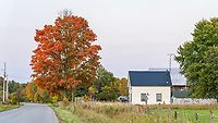 https://Duncan.co/tree-and-farmhouse