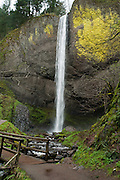 Latourell Falls (249 foot plunge), Latourell Creek, Columbia River Gorge National Scenic Area, Oregon, USA.
