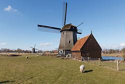 Oudorp, Alkmaar, Noord Holland, Netherlands