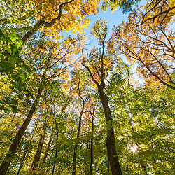 Fall in a forest in Amesbury, Massachusetts.