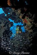 diver observes glass minnows at Minnow Cave,<br /> Berry Islands, Bahamas,<br /> ( Western Atlantic Ocean )  MR 115