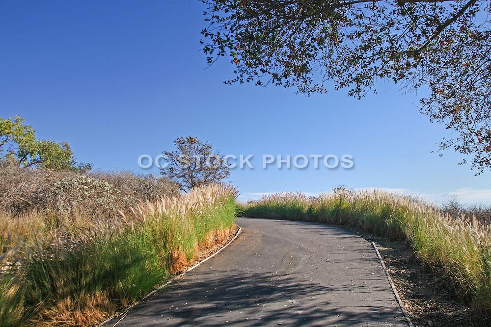 Hiking Trail in Aliso Viejo