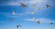 Seagulls fly above a beach.