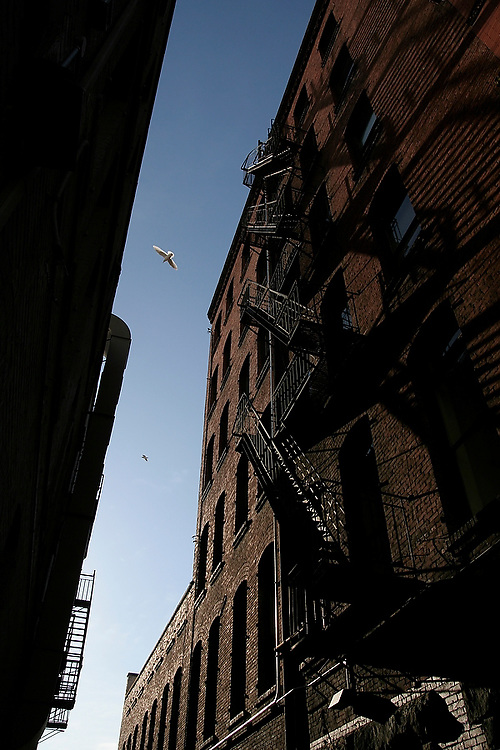 Birds fly overhead in a dark alley between tall brick buildings in downtown Seattle, Washington.