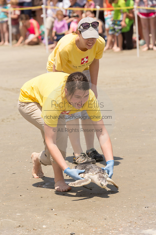 A volunteer returns a rehabilitated Kemp's Ridley sea turtle back into the Atlantic ocean during the release of rescued sea turtles May 14, 2015 in Isle of Palms, South Carolina. The turtles were rescued along the coast and rehabilitated by the sea turtle hospital at the South Carolina Aquarium in Charleston.