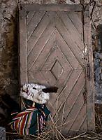 Radzilow, woj podlaskie, 05.03.2019. Ostatni dzien karnawalu , czyli zapusty. Przez wies przechodzi barwny korowod przebierancow z kuklami na kole ciagnietym przez konia oraz z mloda para Izabela i Janem. Jest to historia hulaszczego malzenstwa, ktore w karnawale roztrwonilo majatek i stanowi przestroge, aby podczas Wielkiego Postu wrocic po rozum do glowy N/z koza fot Michal Kosc / AGENCJA WSCHOD