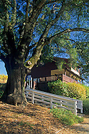 Tasting room at Yorkville Cellars, Yorkville, Mendocino County, California
