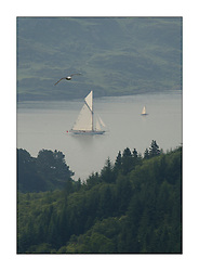Moonbeam and Seabird sailing through the top of the Kyles of Bute on the last days racing...This the largest gathering of classic yachts designed by William Fife returned to their birth place on the Clyde to participate in the 2nd Fife Regatta. 22 Yachts from around the world participated in the event which honoured the skills of Yacht Designer Wm Fife, and his yard in Fairlie, Scotland...FAO Picture Desk..Marc Turner / PFM Pictures