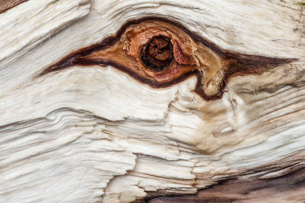 Abstract firewood design, October, Hubbard County, Minnesota, USA