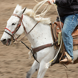 Photos from the 50th Annual Bishop Mule Days Celebration in Bishop, Calif. on Thursday, May 23, 2019. (Photo by David Calvert)