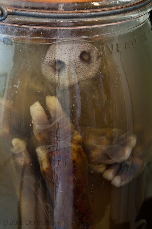 Pig in a jar at Tulane's Natural History Museum