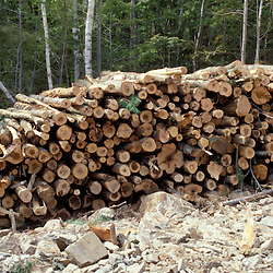 Sidney, ME. Selective Logging. Green Certification. A pile of logs on a selectively harvested site in Maine.