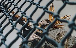THEMENBILD - eine heilige Figur aus Holz hinter einem Gitter während der Corona Pandemie, aufgenommen am 17. April 2019 in Hallstatt, Österreich // a holy figure of wood behind a grid during the Corona Pandemic in Hallstatt, Austria on 2020/04/17. EXPA Pictures ©️ 2020, PhotoCredit: EXPA/ Stefanie Oberhauser