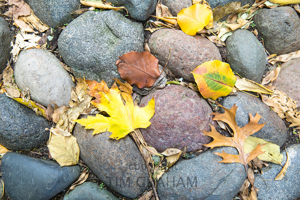 Autumn leaves on cobblestones of Beacon Hill in the historic district of the city of Boston, Massachusetts, USA during the Fall.