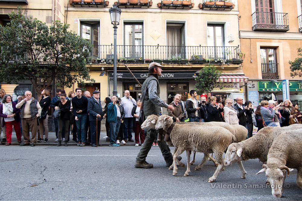 Madrid, Spain. 21st October, 2018. A sheperd leading a folck of sheeps at Mayor Street during transhumance celebrations in Madrid. © Valentin Sama-Rojo