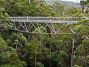 """The """"Valley of the Giants Tree Top Walk"""" is a 600 meter ramp wide enough for wheelchairs and baby strollers, reaching up to 38 meters above the ground through a forest of exceptionally tall eucalyptus trees. Visit this old growth forest between Denmark and Walpole in Walpole-Nornalup National Park, 400 km south of Perth, Western Australia. A trail links the Tree Top Walk to the Ancient Empire boardwalk where you can get close to the big 400-year-old trees. Web site: www.valleyofthegiants.com.au"""
