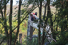 2020-07-22 HS2 Rebellion halts HS2 tree felling