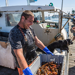 Sternman Eric Murray unloads lobster from 'Afternoon Delight' at the Vinalhaven Fishermen's Co-op in Vinalhaven, Maine.