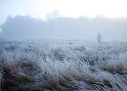 © Licensed to London News Pictures. 06/11/2014. Richmond, UK. A man walks through a frosty field.  People and animals during a frosty start to the day on 6th November 2014. Temperature fell across the country overnight. Photo credit : Stephen Simpson/LNP