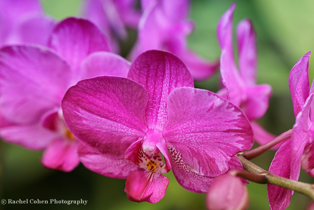"""""""Purple Orchid Special""""<br /> <br /> Lovely purple orchids with a green background!"""