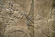 Assyrian relief sculpture panel of Ashurnasirpal lion hunting.  From Nineveh  North Palace, Iraq,  668-627 B.C.  British Museum Assyrian  Archaeological exhibit no ME 124867 .<br /> <br /> If you prefer to buy from our ALAMY PHOTO LIBRARY  Collection visit : https://www.alamy.com/portfolio/paul-williams-funkystock/ancient-assyria-antiquities.html  Refine search by adding background colour, place, subject, museum etc into the LOWER SEARCH WITHIN GALLERY box to <br /> <br /> Visit our ANCIENT ASSYRIAN PHOTO COLLECTIONS for more photos to download or buy as wall art prints https://funkystock.photoshelter.com/gallery-collection/Ancient-Assyrian-Art-Artefacts-Antiquities-Historic-Sites-Pictures-Images-of/C0000cjRqQyJjLag