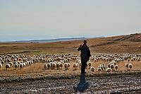 Georgie, Caucase, Kakheti, Davit Gareja, steppe et berger // Georgia, Caucasus, Kakheti, Davit Gareja, shepherd and steppe