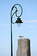 Lamppost and seagull at Bonifacio's Ville Haute atop the chalky limestone cliffs.