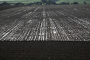 Dark alluvial soil of drained marshland, Butley, Suffolk, England