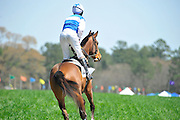 27 March 2010 : Paddy Young leaves the paddock aboard Orison for the first race.