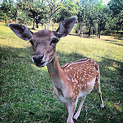 Deer. #czechrepublic #semily #animal #deer #mountains #portrait #light #shadow #field #tschechien #reh #bambi