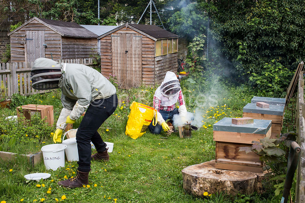 Bee keeper using a smoker to calm the bees before openng the hives. Urban bee keeping, community garden project, George Downing Estate, Hackney, East London.