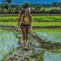 Meredith Wiltsie treks through rice paddies in the Marsyandi River Valley, Nepal.