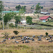A cluster of stone jars next to buildings on the outskirts of Phonsavan at Site 1 of the Plain of Jars in north-central Laos. Much remains unknown about the age and purpose of the thousands of stone jars clustered in the region. Most accounts date them to at least a couple of thousand years ago and theories have been put forward that they were used in burial rituals.
