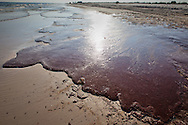 Oil on the shore at Bon Secour National Wildlife Refuge , in  Alabama on June 12, 2010 is the worst it has been since the BP well started leaking on April 20, 2010