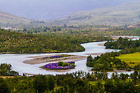 A small island in the middle od Rio Baker covered with lupines, Chile