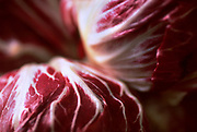 Close up selective focus photo of a couple heads of Radicchio