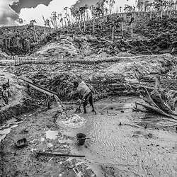 Fea0093883. DT News.Tananarive a mining village near AMBATONDRAZAKA,The Ankeniheny-Zahamena Corridor, Madagascar.Pic Shows a man and his wife and children work their patch of mine besides a felled tree looking for sapphires in the village of Tananarive