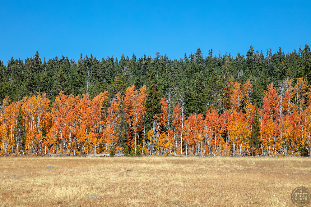"""""""Paige Meadows in Autumn 1"""" - Fall photograph of the colorful Aspen trees at Paige Meadows, near Tahoe City, California."""