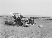 4264Binder harvesting wheat on the 35 acre field of Albert Meier. July 17, 1939.